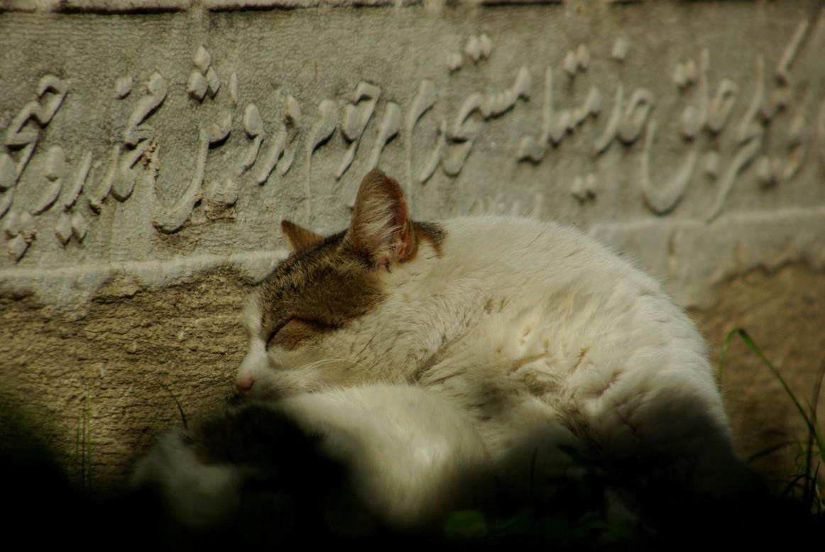 Cmentarz to odpowiednio spokojne miejsce do snu, Stambuł
