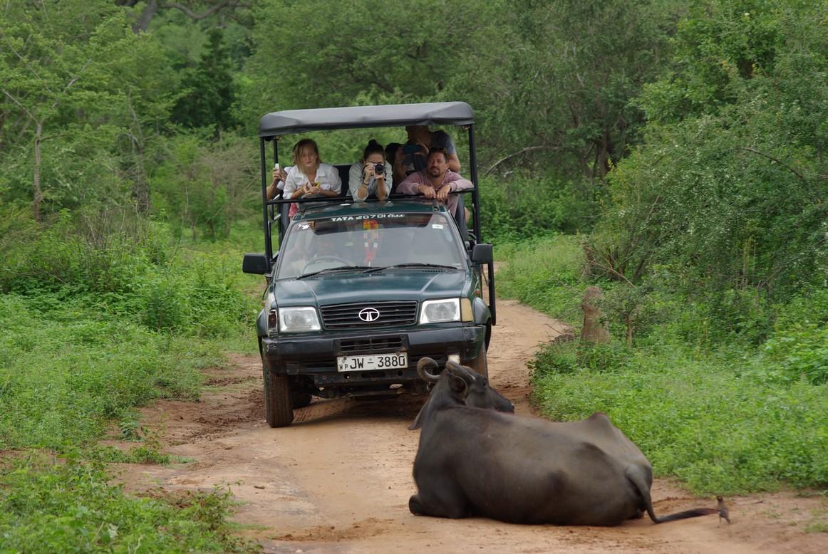 W poszukiwaniu najlepszego ujęcia, Park Narodowy Udawalawe, Sri Lanka